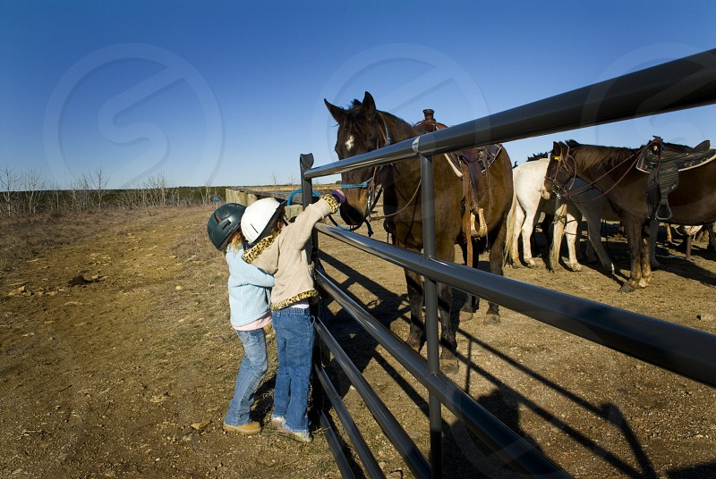 Little girls petting a horse through the fence photo