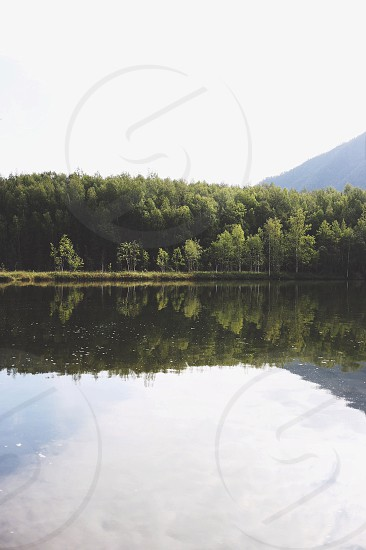 green trees along body of water photo
