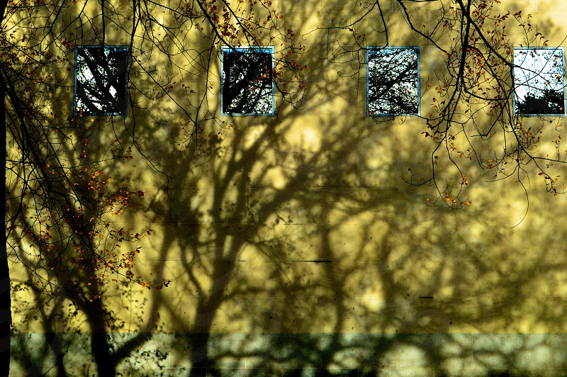 More shadows or reflections photo