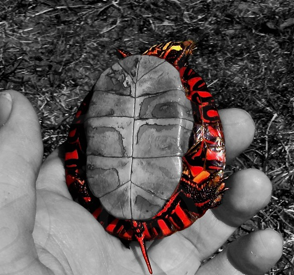 selective photo of red and orange tortoise shell photo