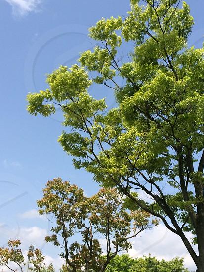 新緑の風景(Green landscape with trees) photo