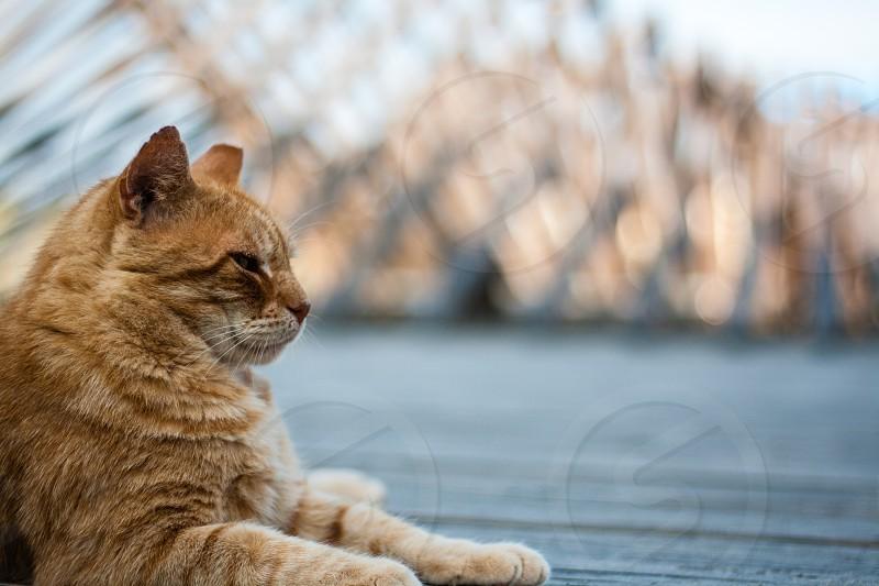 cat boardwalk Atlantic City New Jersey stray rescue program bokeh orange animal morning dawn sun photo