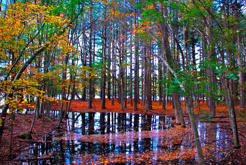 flooded tree forest photo photo