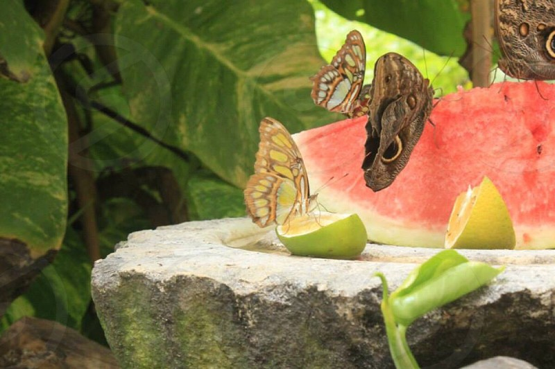 #butterfly #green #lime #watermelon #colors  photo