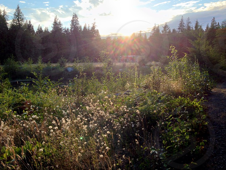 Sunset in the meadow photo