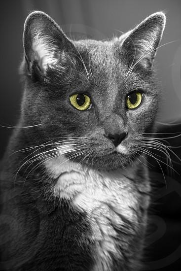 Cateyeskittenanimalpetportraittouch of colorcatsphotographyNikon  photo