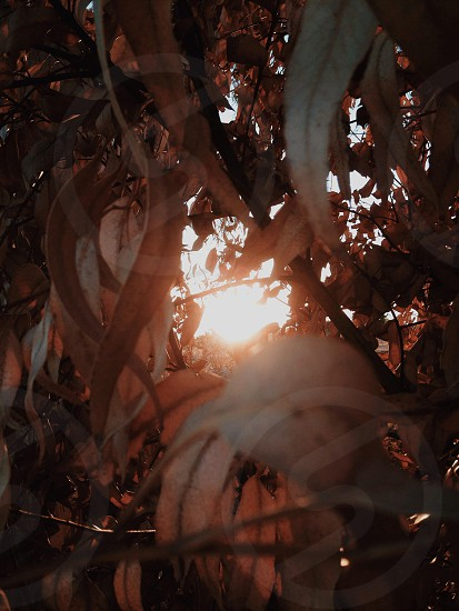 Through the leaves. photo