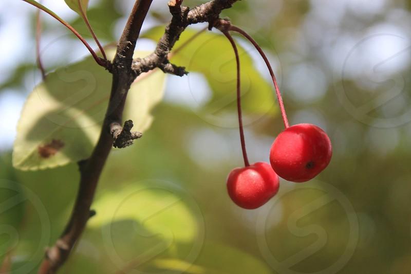 Summer's Fruit photo