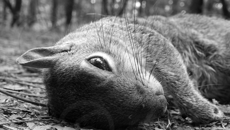 Dead squirrel in the forest in black and white. photo