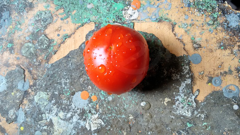fresh and wet tomato on wooden surface photo