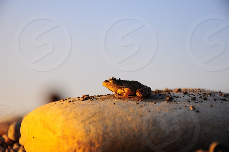 brown frog on stone photograph photo