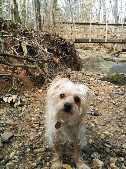 Small dog on a hike in the woods on a spring day. photo