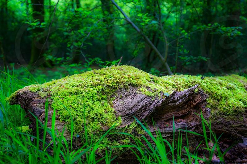 Wood moss green forest calm still tranquil quiet log photo