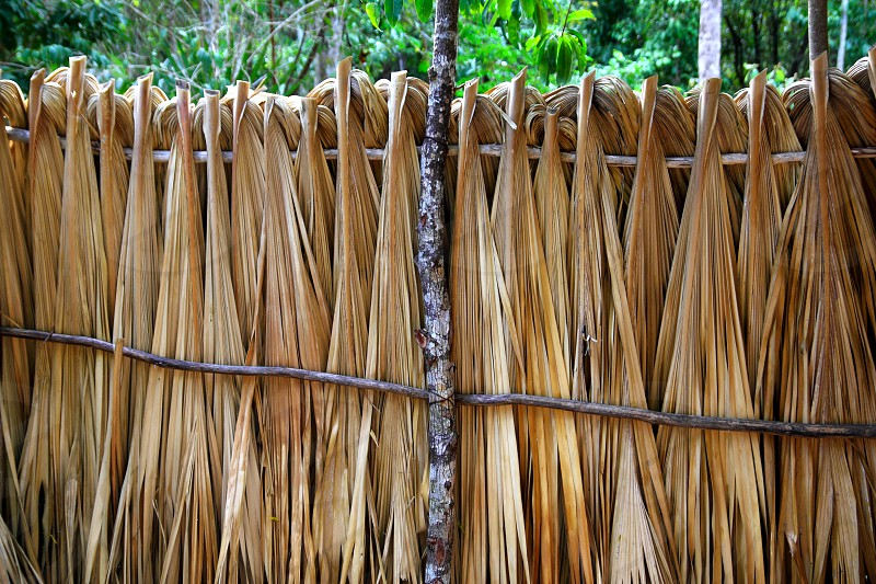 Mayan palm tree leaves wood fence in rainforest Jungle Mexico photo