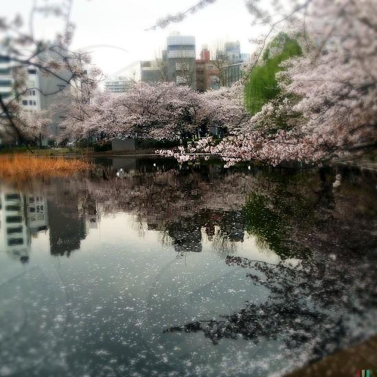 white tree beside lake photo