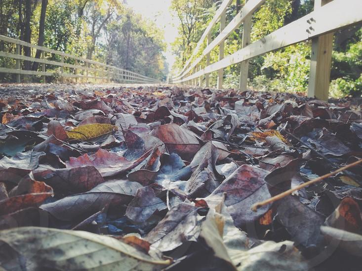 Fallen leaves on a walking trail  photo