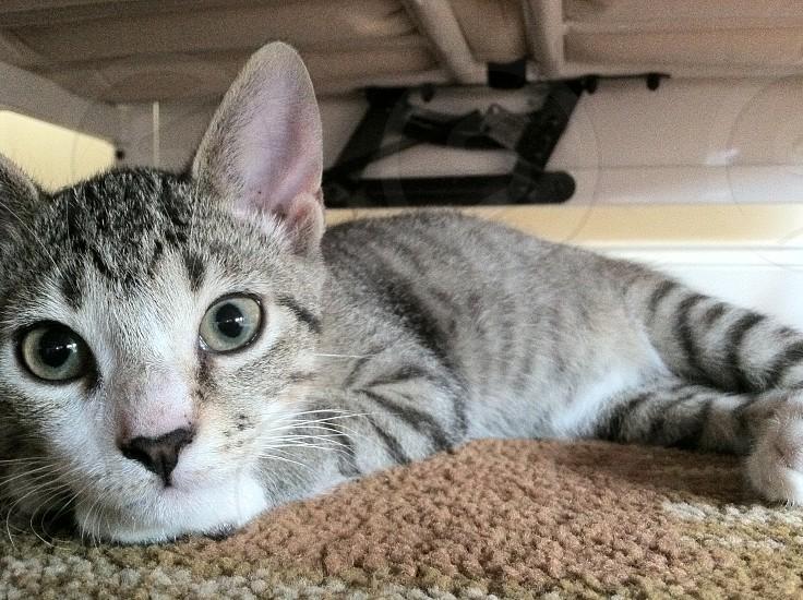 Meow. photo