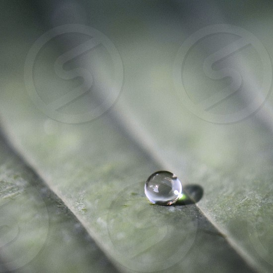 Water droplet macro photo