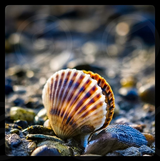 shadow depth of field photography of clam shell photo
