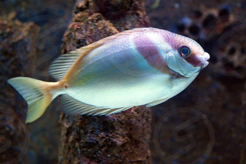 white and pink fish photo