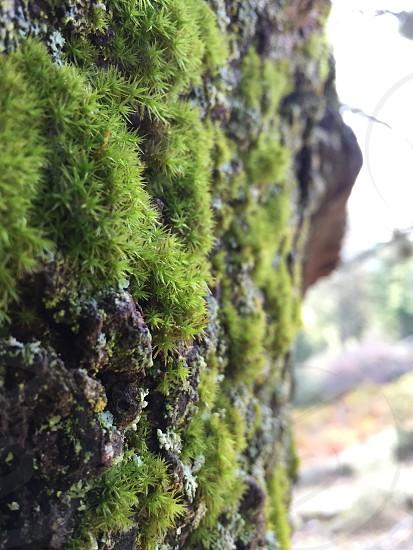 Moss tree plant nature photo