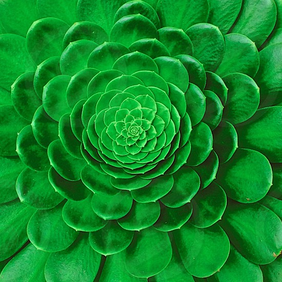 Succulent plant -San Francisco photo