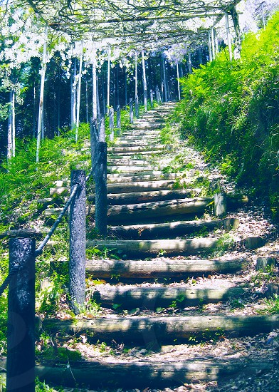 PHOTO CHALLENGE 'Paths' (1): Lovely healthy Path :) photo