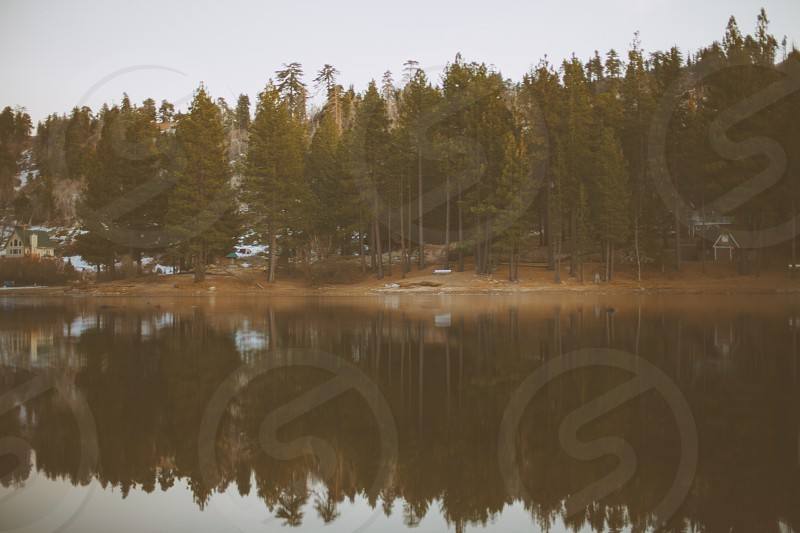forest with tall tree and pine trees and lake view photo