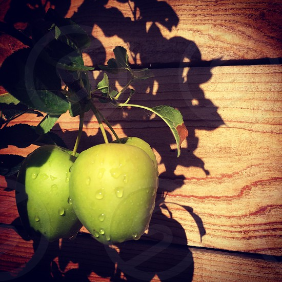 Green apples photo