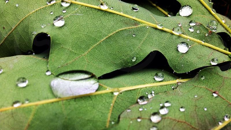Rain drops on a leaf photo