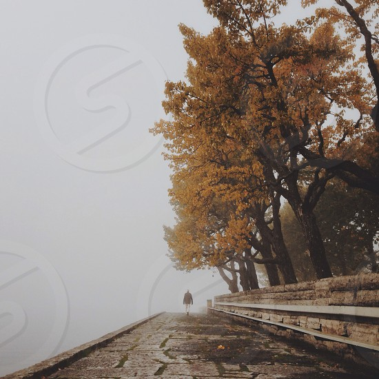 person walking on grey concrete path with brown tall trees photo