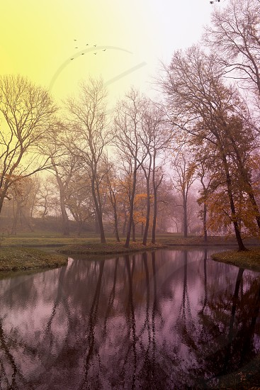 Autumn forest and lake photo