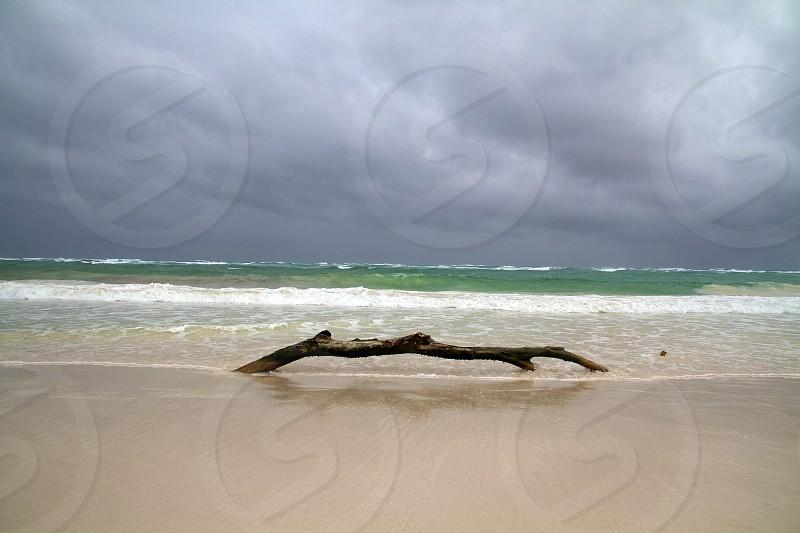 tree branch on seashore photo
