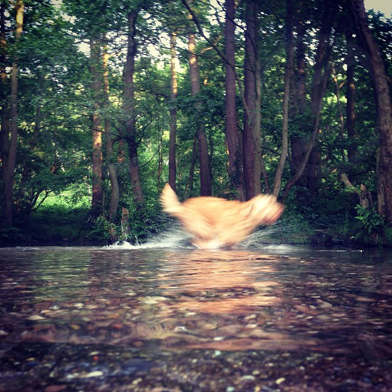 Dog running water photo