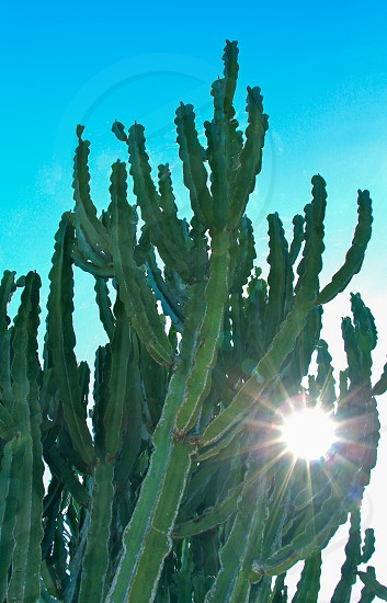 green cactus under blue sky photo