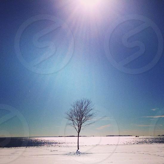 tree under sunny weather photo