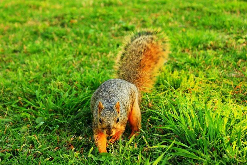 Springtime Park Nature Colors Squirrel photo