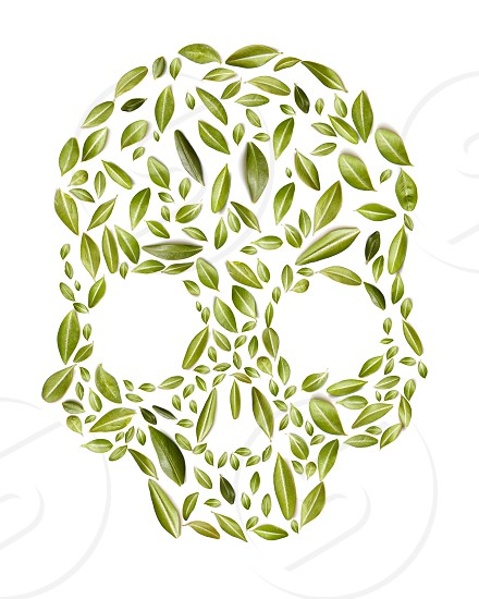 skull made of green leaves on white background eco concept health photo