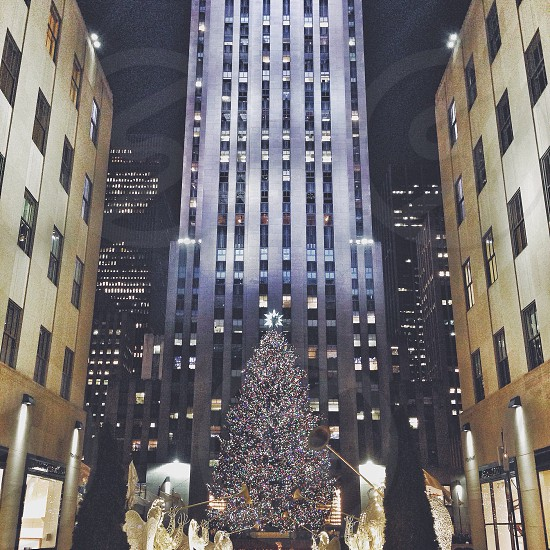 lighted christmas tree in front of gray building photo