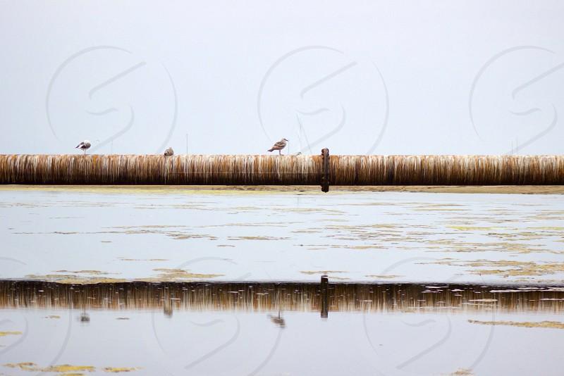 Santa Barbara California bird beach pipe water reflection photo