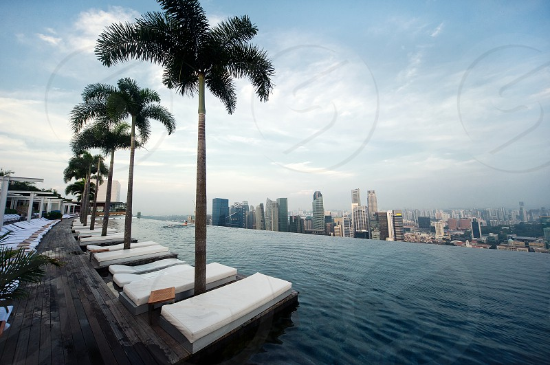 palm trees and pool bed view photo