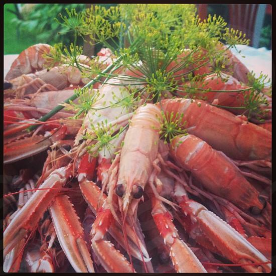 swedish crayfish party food plate photo