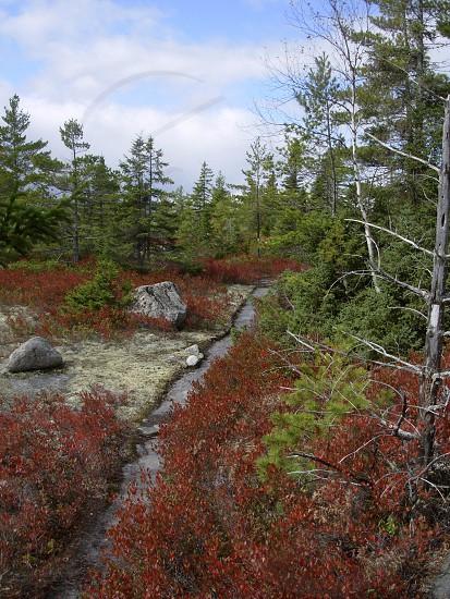 The Appalachian Trail in Maine  photo