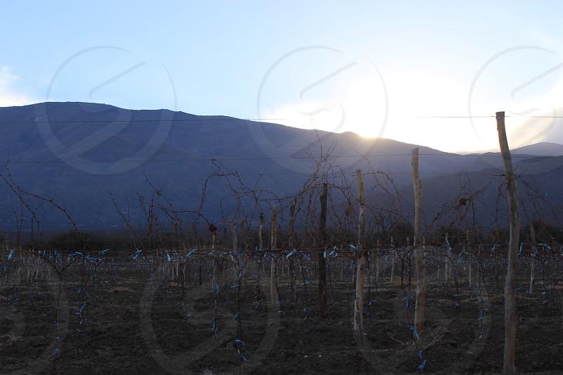 vineyard next to andes mountain Cafayate salta argentina photo