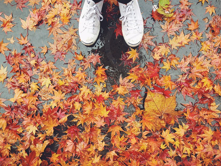 red and yellow maple leaves on ground photo