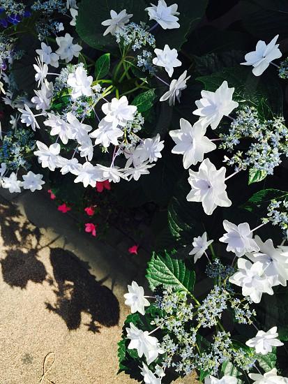flowers JAPAN. photo
