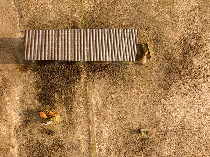 Aerial view from drone horse farm with animals eating hay from a wooden box on a sunny day. photo