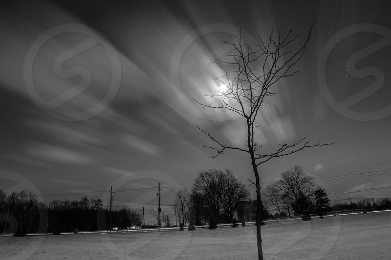 Meditating Tree photo