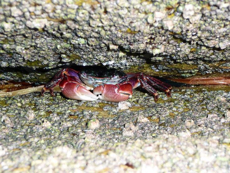 a view of a red crab photo