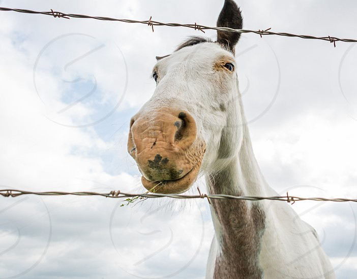 Texas horse white eating barbed wire sky country farm photo